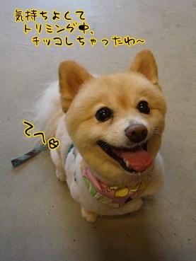 kinako120908.jpg