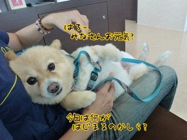 kinako120916.jpg