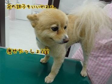 kinako120916_3.jpg
