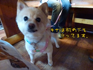 kinako121022.jpg