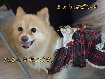 kinako121117.jpg