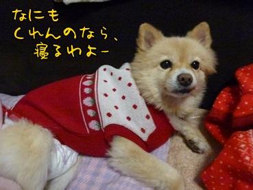 kinako121121.jpg
