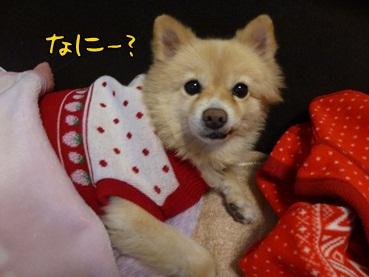kinako121121_2.jpg
