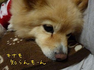 kinako130110.jpg