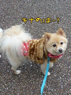 kinako130110_2.jpg