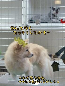kinako130111.jpg