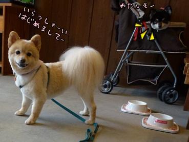 kinako20120608.jpg