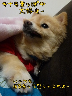 kinako_121126.jpg