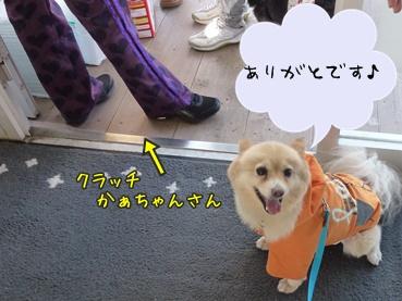 kinako_k111120.jpg