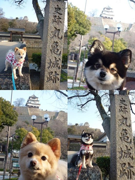 kinako_maru1303-tile.jpg