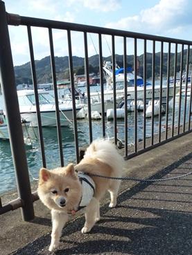 kinako_shirahama.jpg