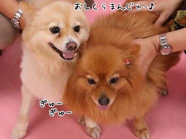kinakoto111120_6.jpg
