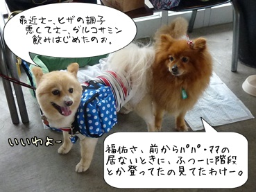 kinakoto120609_1.jpg