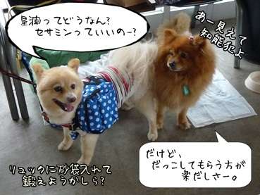 kinakoto120609_2.jpg