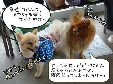 kinakoto120609_3.jpg