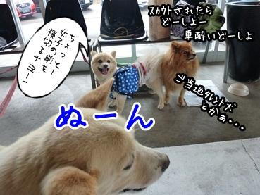 kinakoto120609_7.jpg