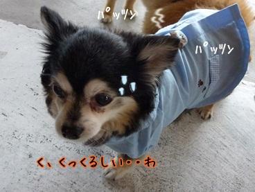 kuruchan120609_2.jpg