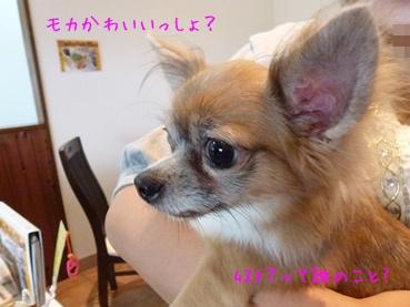 mocachan111022_g.jpg