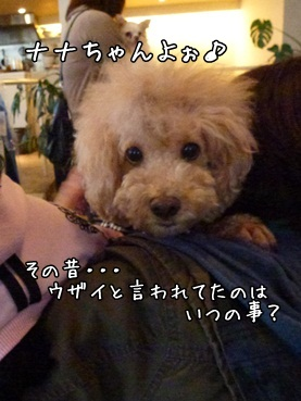 nanachan121117.jpg