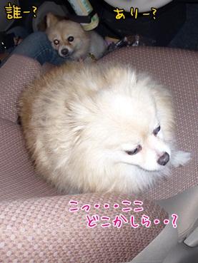 nazuchan121117.jpg