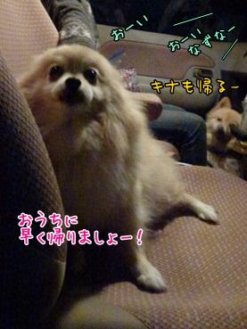 nazuchan121117_2.jpg
