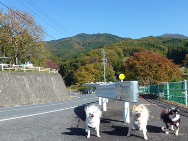 o_misaka121110.jpg