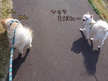 sakura130323_3.jpg