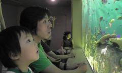 「海の宝石箱」を見るnobuとTsubaki