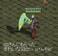 カリビスきれいな羽