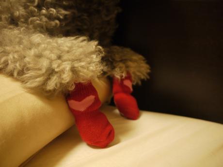 のっこと靴下2