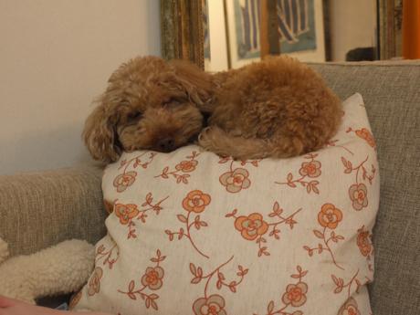 トントおやすみ