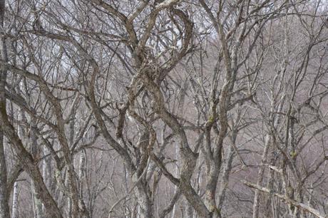 戦場ヶ原の木