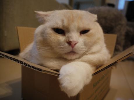 カシミヤと箱