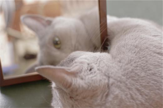 スモーキーと鏡