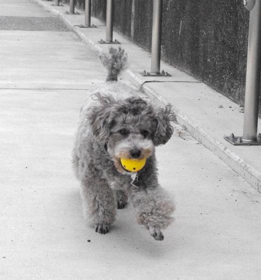 のっこのボール遊び