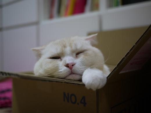 カシミヤと箱2