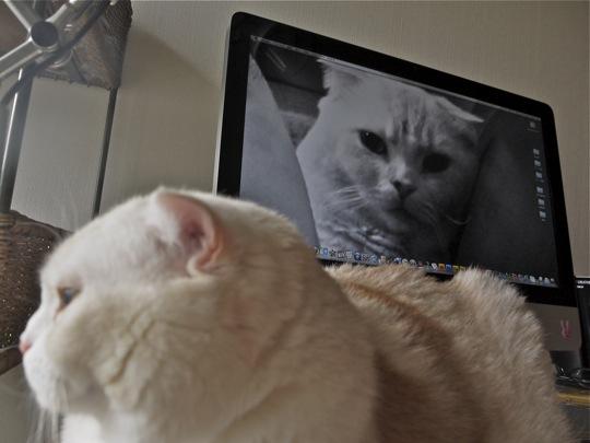 カシミヤとスクリーン
