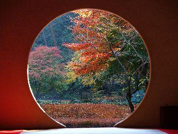 明月院の 丸窓