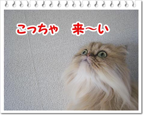 12-0929-IMG_3286.jpg