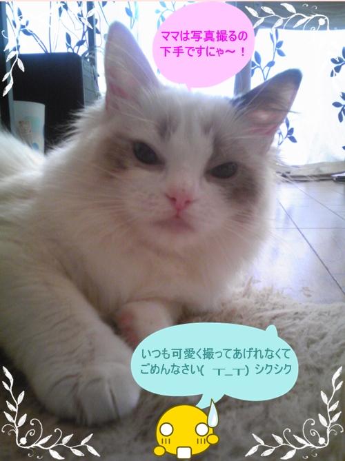 Image113-01.jpg