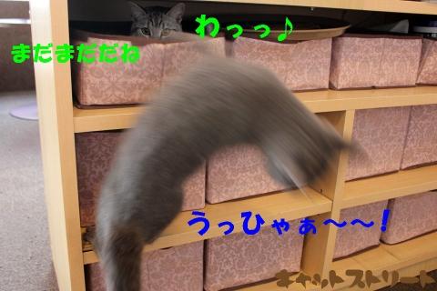 4153.jpg