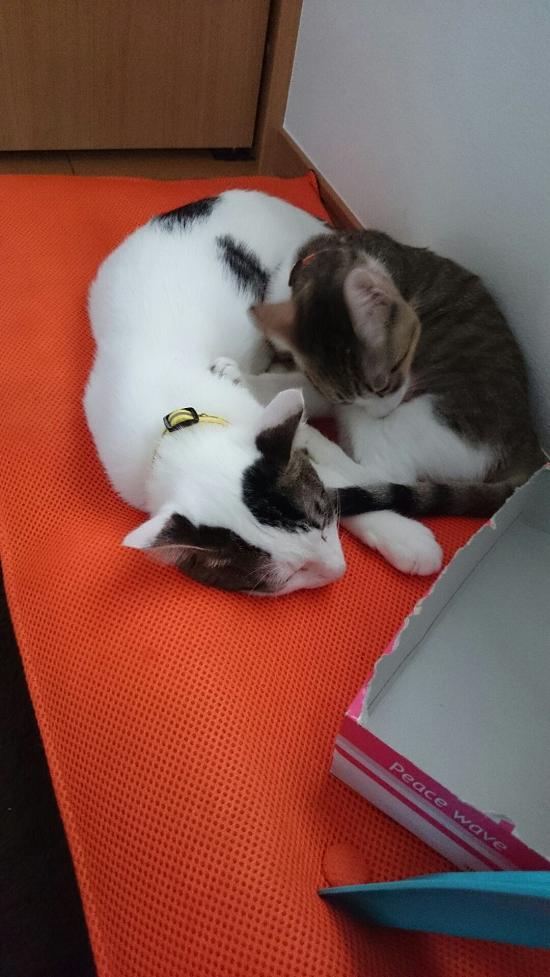 バル&リン-12