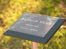 2011.11.04 DSCN0332
