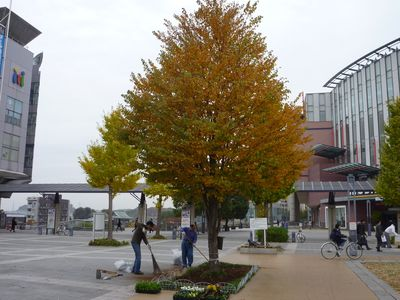 花植え1114-1