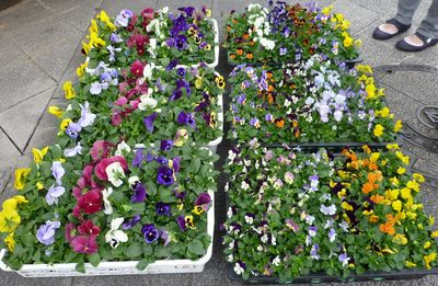 花植え1024