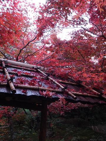 201211kyoto020031.jpg