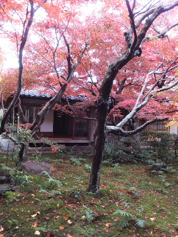 201211kyoto020033.jpg