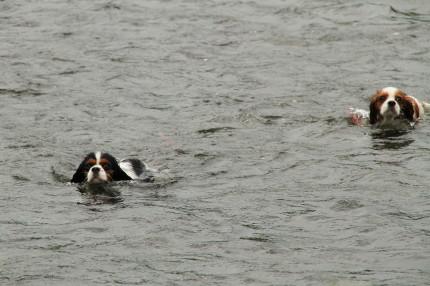 チャコ&エリー泳ぐ