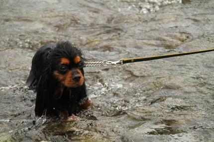 ナナちゃん、頑張って泳いだね
