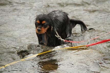 メイちゃん、頑張って泳いだね